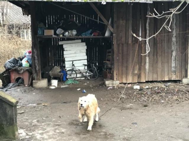 zdjęcie psa