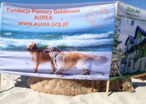 parawan fundacyjny, słoneczny dzień na plaży